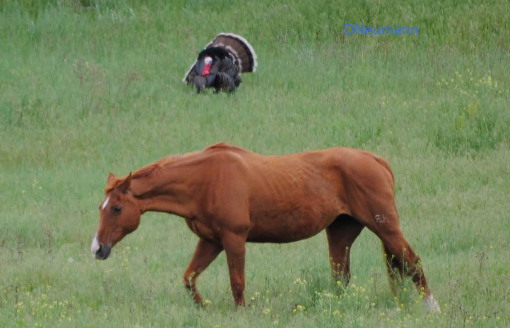 Black Hills Wild Horse Sanctuary Aroundustyroads
