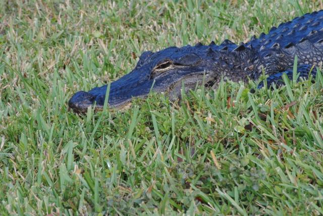 FloridaMexico 641