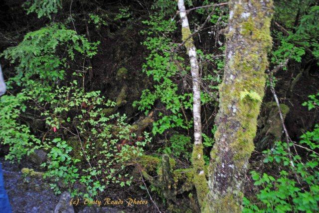 Alaska2013 137 copy