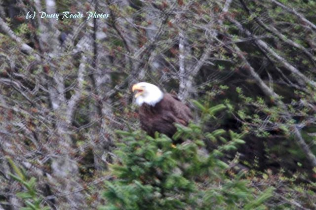 Alaska2013 220 copy