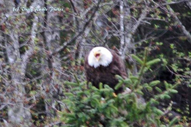 Alaska2013 221 copy