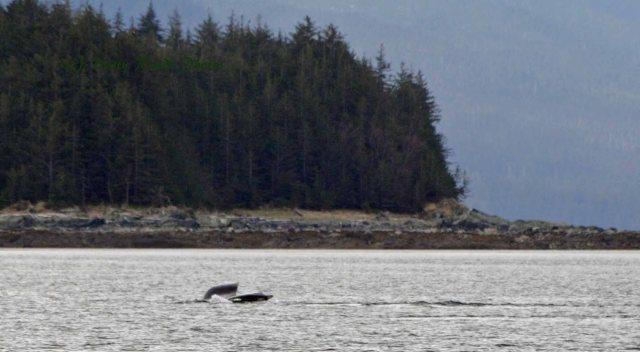 Alaska2013 240 copy