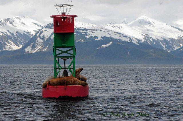 Alaska2013 256 copy