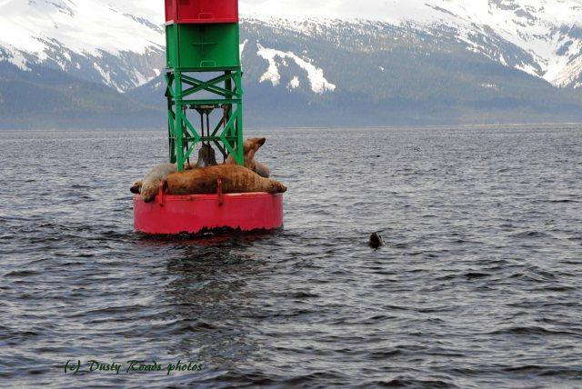 Alaska2013 257 copy