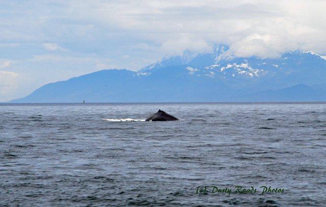 Alaska2013 273 copy