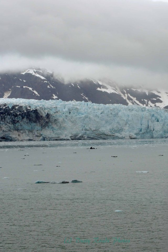Alaska2013 488 copy