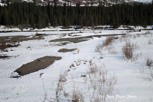 Alaska2013 773 copy