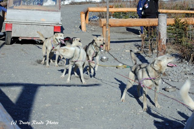 Alaska2013 861 copy