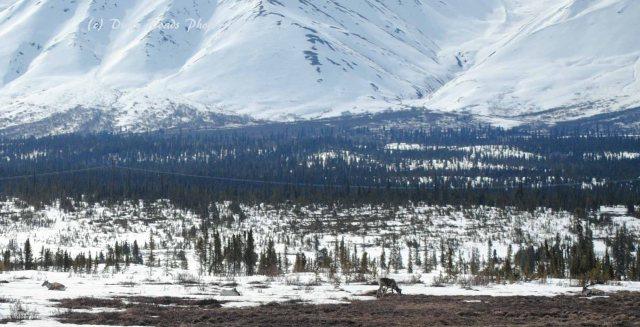 Alaska2013 888 copy