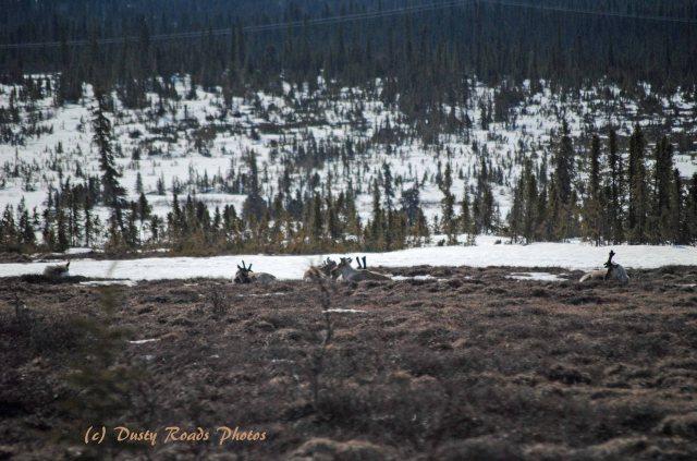 Alaska2013 890 copy