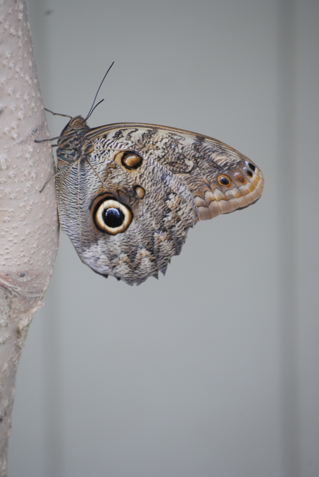 Butterflies 045