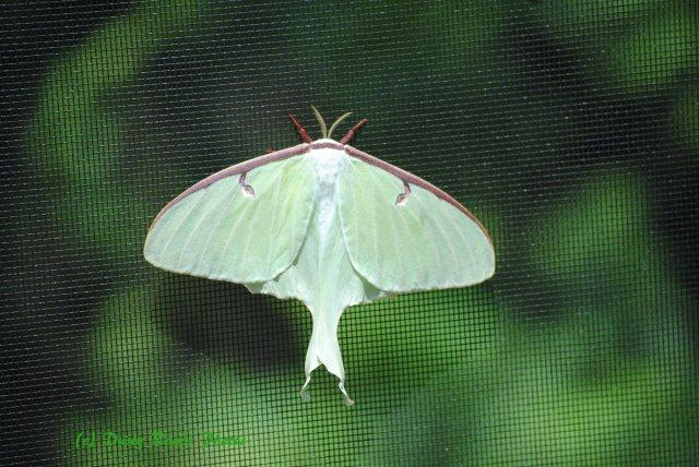 Butterflies cape Cod Canal 005 copy