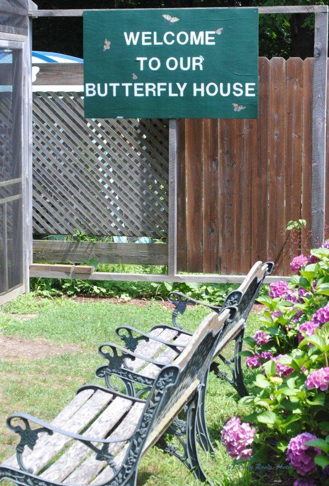 Butterflies cape Cod Canal 047 copy
