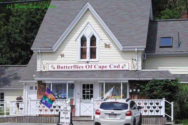 Butterflies cape Cod Canal 048 copy