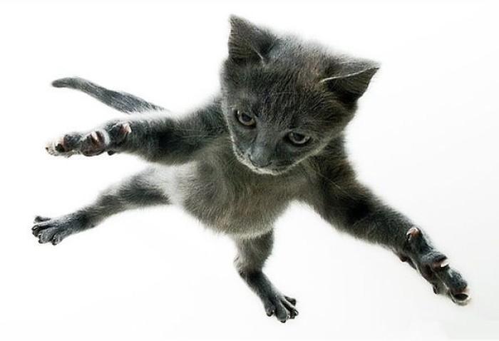 Funny Cats Fly