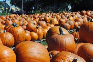 pumpkins 019 copy