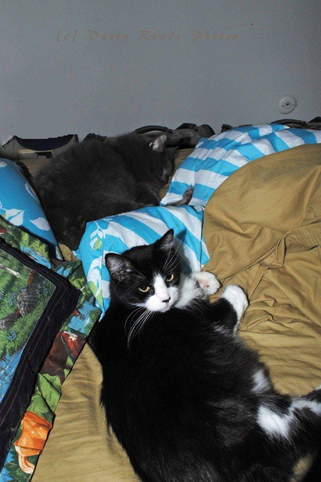 sleepycats 003a copy