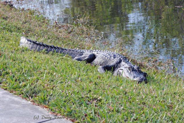 FloridaMexico 639 copy