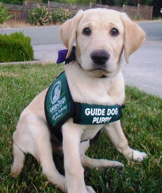 guide_dogwsf