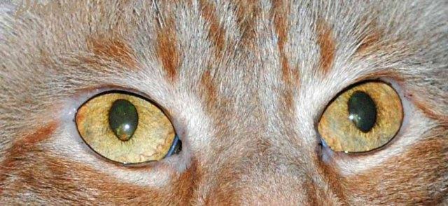 Rocky eyes copy