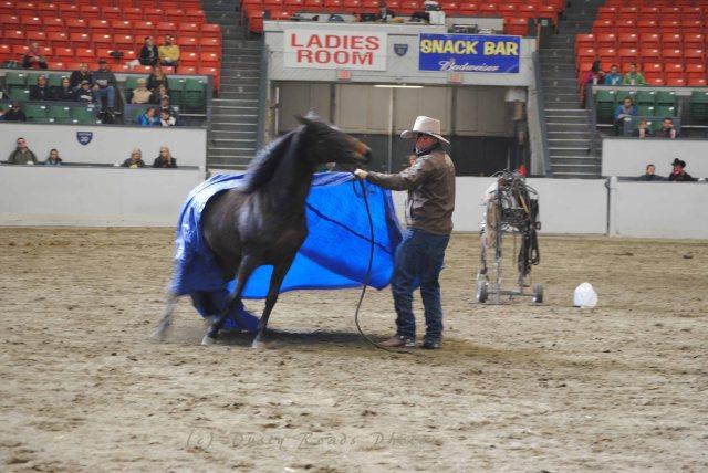 horse show 015 copy