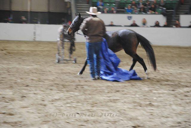 horse show 021 copy