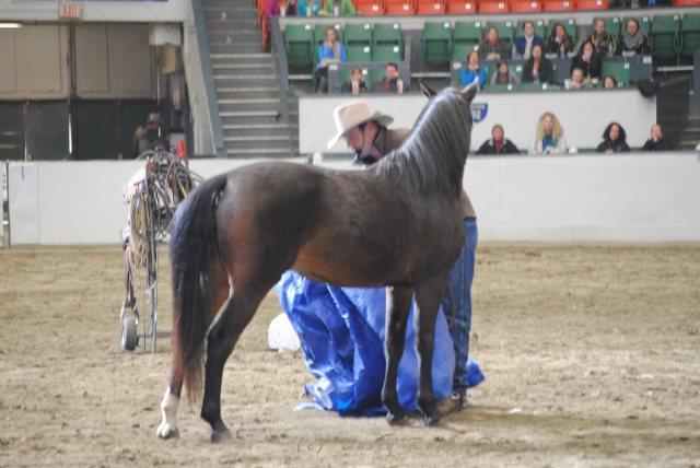 horse show 024 copy