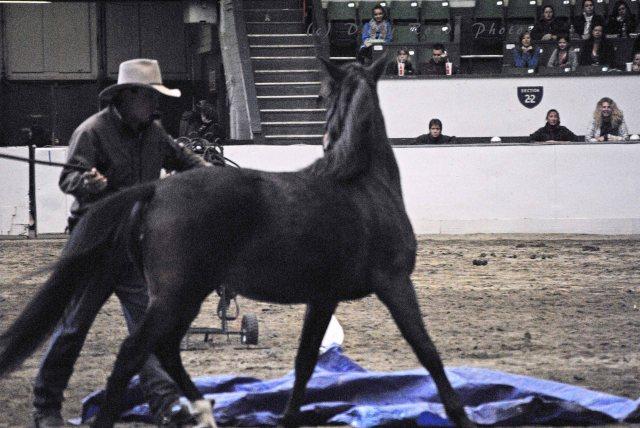 horse show 026a copy