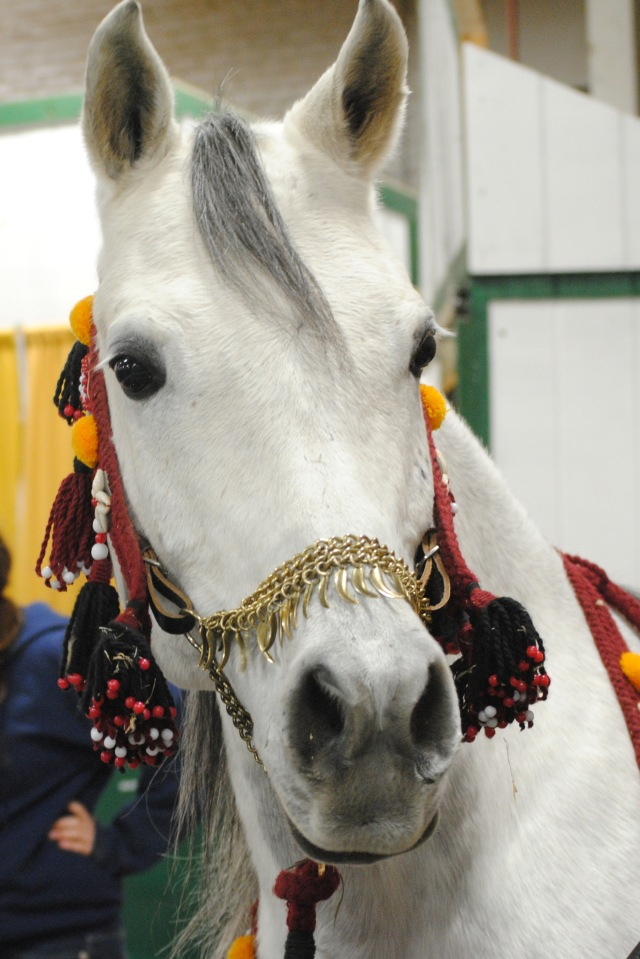 horse show 037a