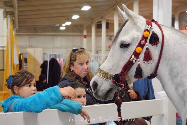 horse show 039 copy