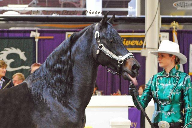 horse show 053 copy