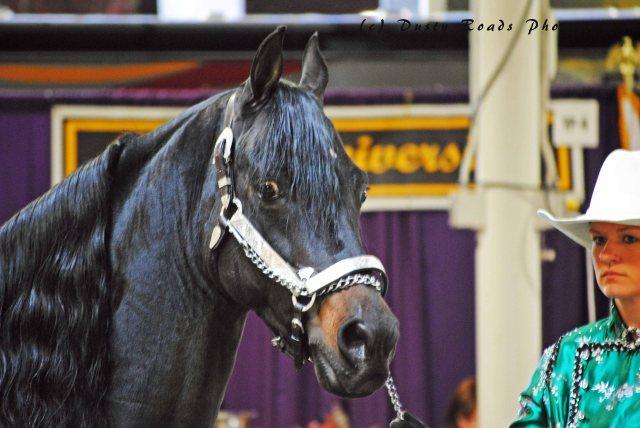 horse show 054a copy