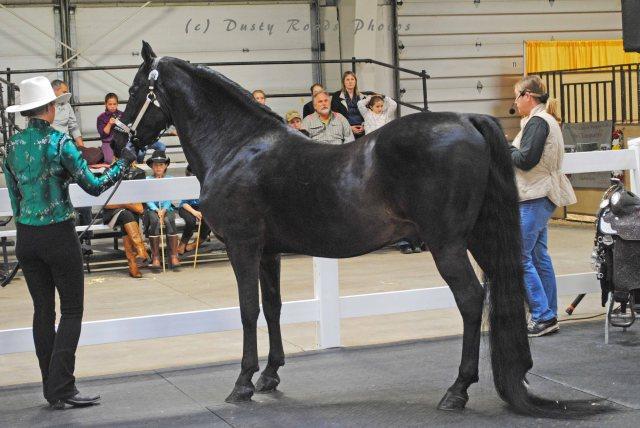 horse show 063a copy