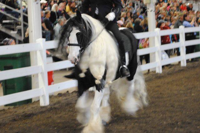 horse show 071 copy