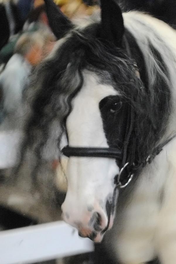horse show 071a