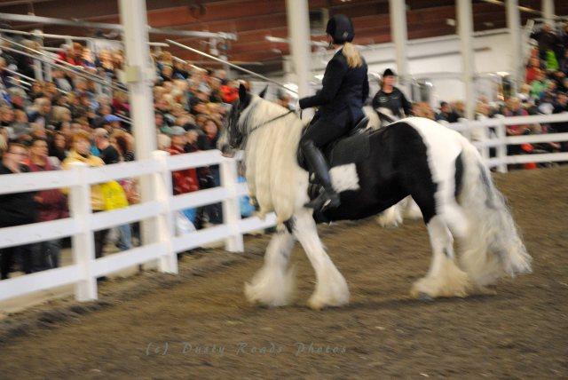 horse show 076 copy