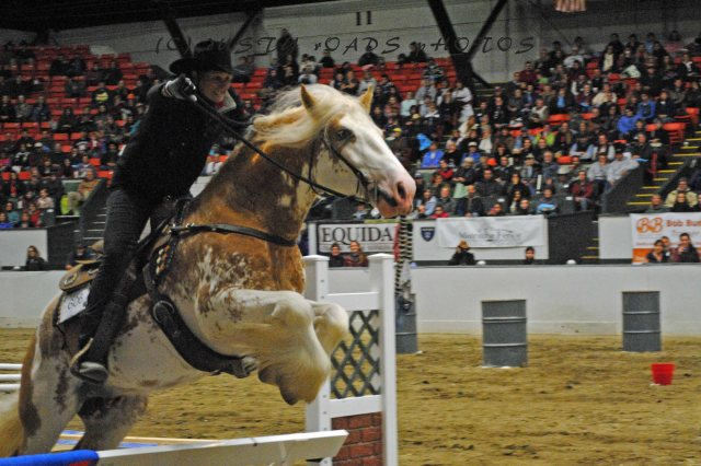 horse show 157 copy