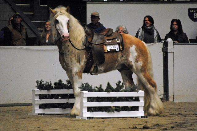 horse show 161a
