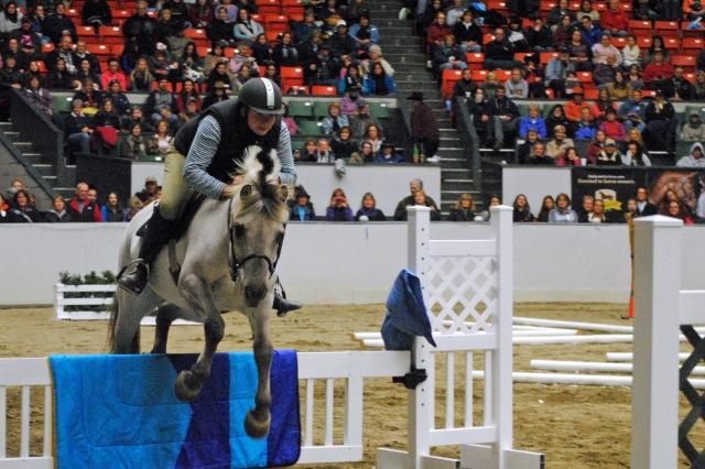 horse show 167A