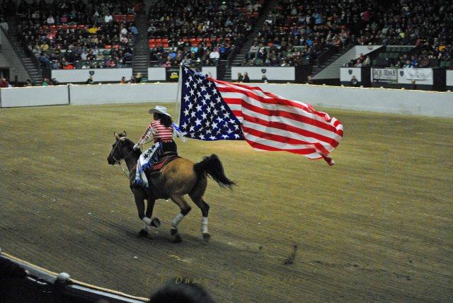 horse show 261 copy