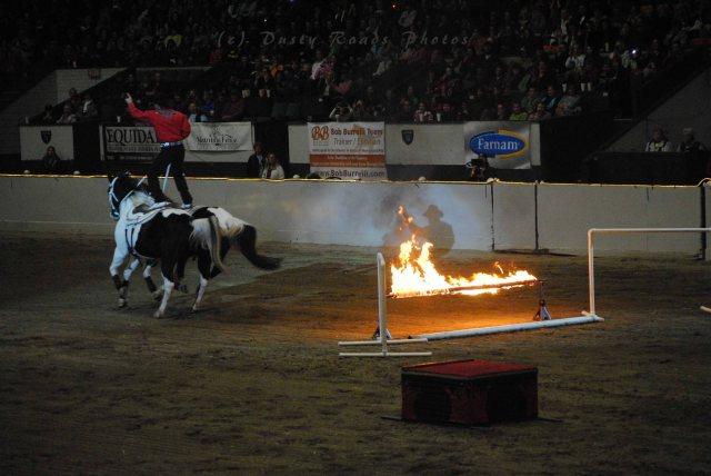horse show 301 copy
