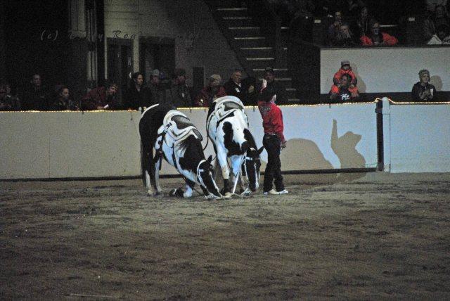 horse show 302 copy