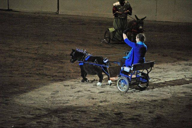 horse show 316 copy