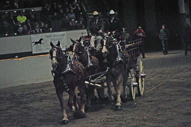horse show 318 copy