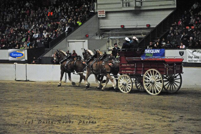 horse show 319 copy