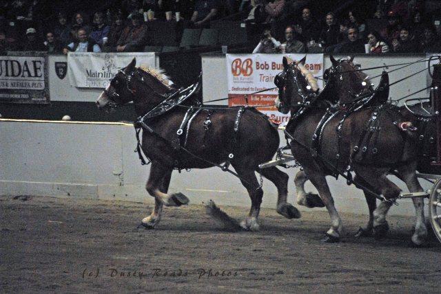 horse show 320 copy