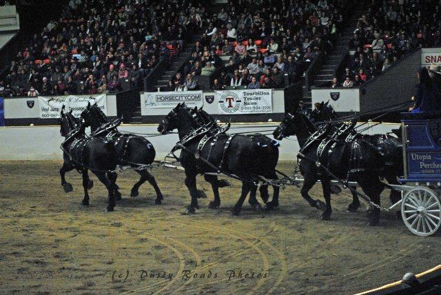 horse show 328 copy