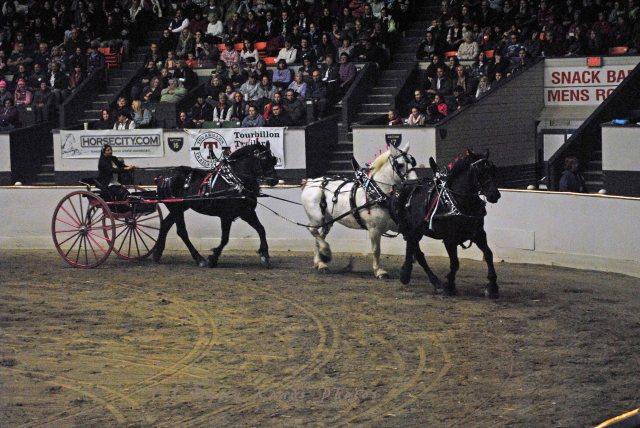 horse show 337 copy