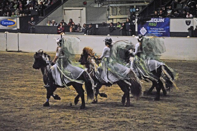 horse show 347a copy