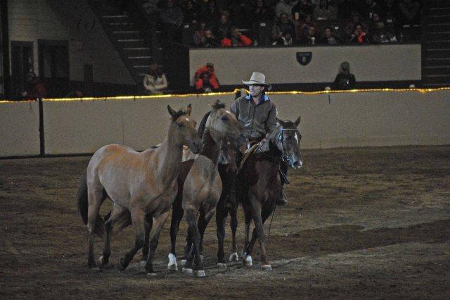 horse show 355 copy